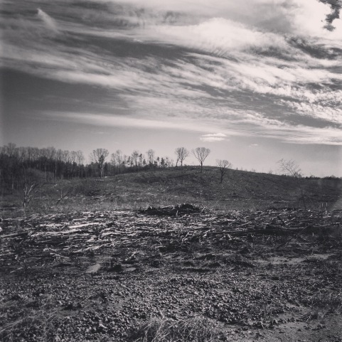 Davenport. Perry County Clear Cut, Alabama, from Annotated Bibliography of Clear Cutting